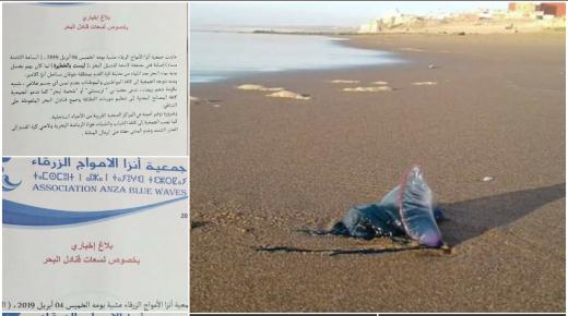 خطر، قناديل البحر يغزو سواحل أكادير وهيئات مدنية تحذر
