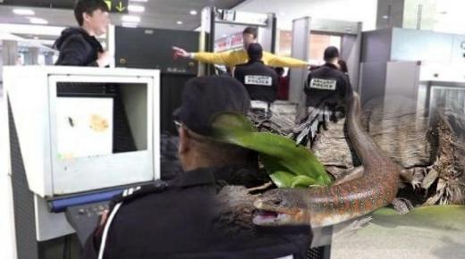 الشرطة تجهض تهريب زواحف لمواطن سويدي بمطار اكادير