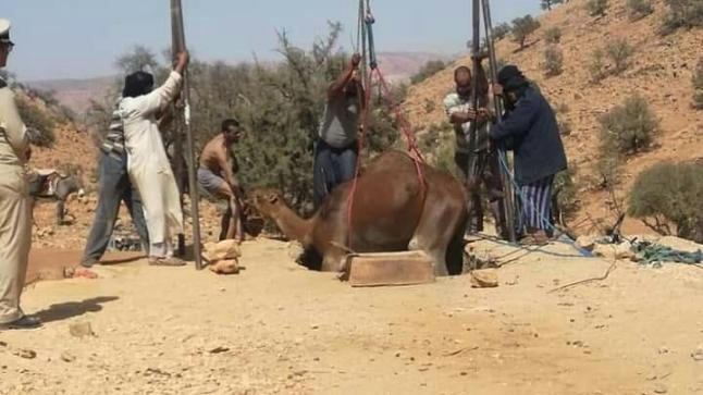 """سقوط """" جمل """" داخل نطفية في هلالة بآشتوكة آيت باها"""