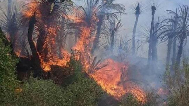 النيران تلتهم النخيل بواحة آيت منصور نواحي تافراوت