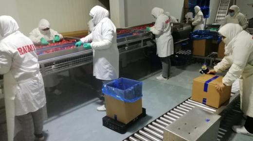 نقابة تربط الاستهتار وعدم الجدية بظهور الوباء في الوحدات الإنتاجية