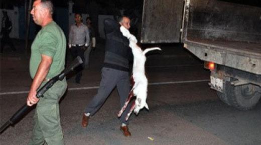 """تحرير المواطنين من """" الكلاب الضالة """" في بيوكرى"""