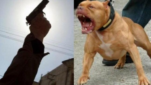 الرباط : مقدم شرطة يضطر لاستعمال سلاحه ضد كلب شرس حرضه صاحبه على الشرطة