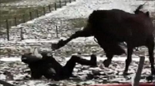 ركلة حصان تودي بحياة طفل بحي الشنينات أولاد تايمة