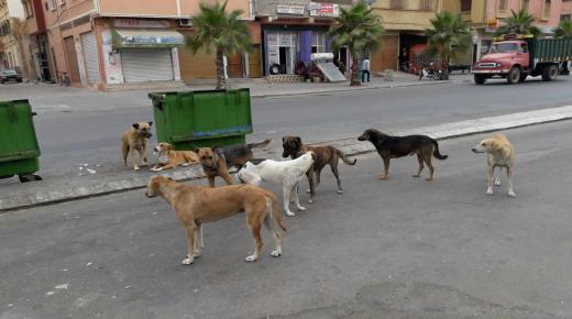 كلاب ضالة تثير مخاوف سكان بيوكرى