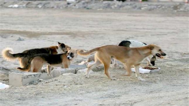 كلاب ضالة تنهش جسم طفل قاصر بإحشاش في سيدي بيبي