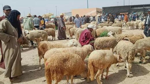 قبيل عيد الأضحى قراءة في أثمنة الأغنام بأسواق سوس