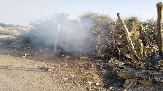 مجهولون يضرمون النار في نبات الصبار بحي الحديب أولاد تايمة