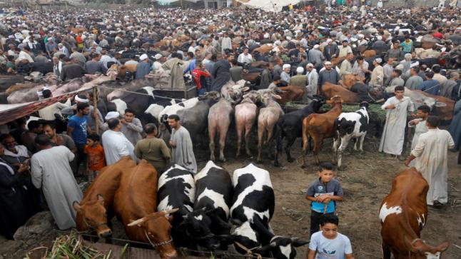 زيادة في أثمنة المواشي تغضب الجزارين بسوس ماسة