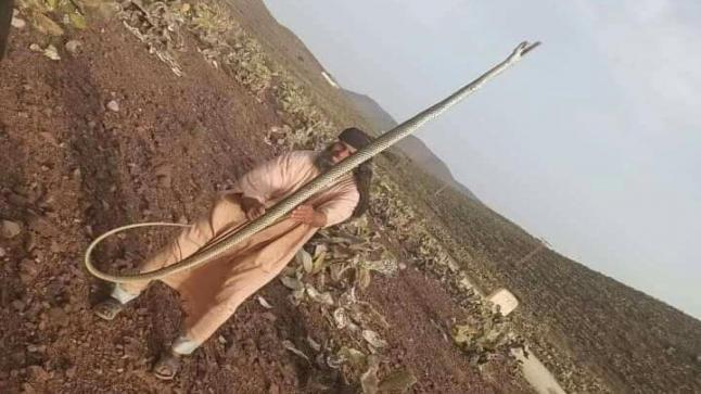 مواطن يقتل أفعى سامة طولها أربعة أمتار بآيت بعمران