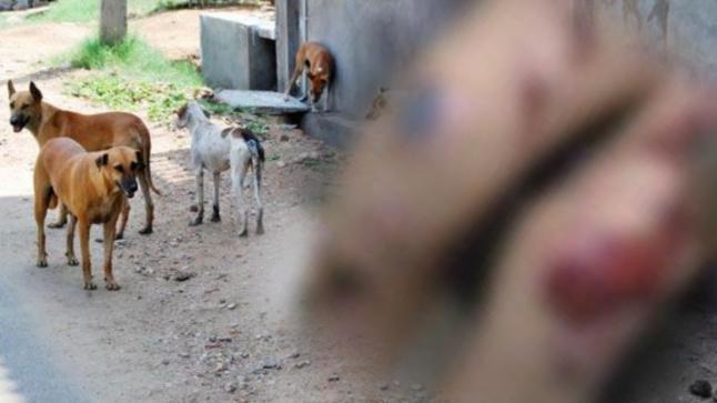 وفاة الطفل الذي نهشته الكلاب بدوار احشاش سيدي بيبي