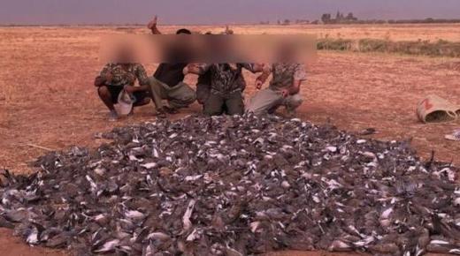 وزارة الفلاحة تكشف نتائج التحقيق وتُتابع الشركة المنظمة للصيد الجائر للطيور أمام القضاء