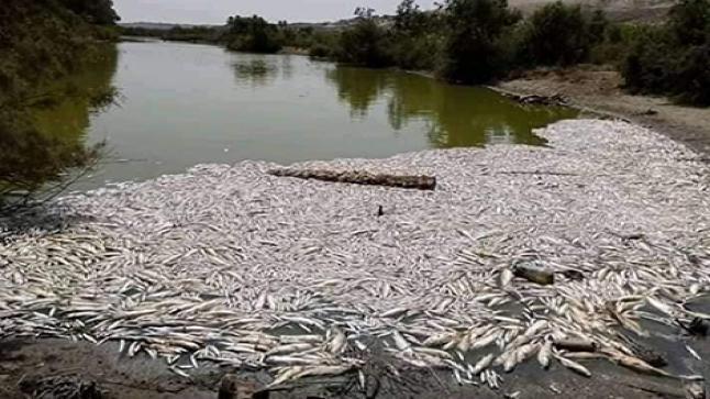 نفوق كمية خطيرة من الأسماك بوادي ماسة