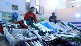 جولة بالصوت والصورة بسوق السمك ببيوكرى