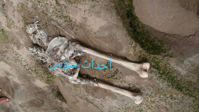 ظهور عظام بشرية بشاطىء تستنفر سلطات آشتوكة ايت باها