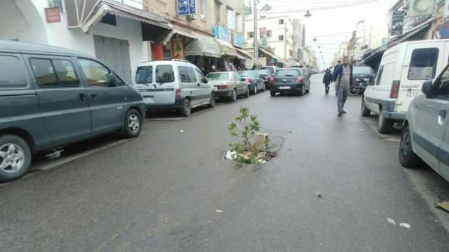 إستهزاء بعد غرس شجرة وسط طريق في إنزكان