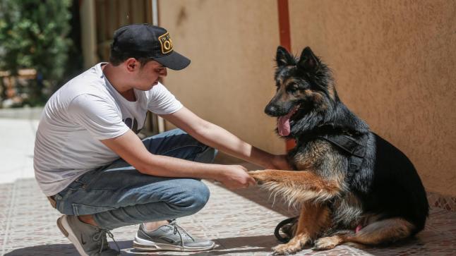 مذكرة صارمة من المديرية العامة للأمن الوطني حول ترويض الكلاب