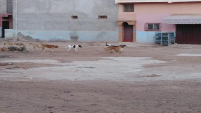 التمسية المواطن بين خطر انتشار الكلاب الضالة و غياب المصل..