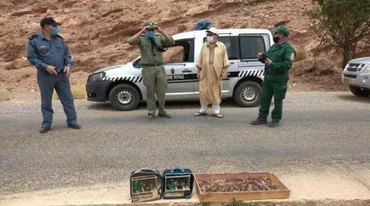 """ضبط جناة يصطادون طائر """" الحسون """" بآيت عبد الله"""