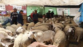 فيديو : شوفو أثمنة الأضاحي والغلاء بأسواق المواشي